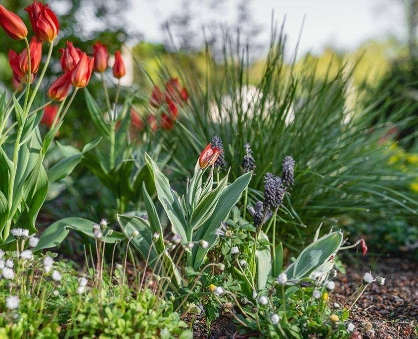 Begrünung Alterswohnungen mit Staudenmischbepflanzung und Blumenwiese