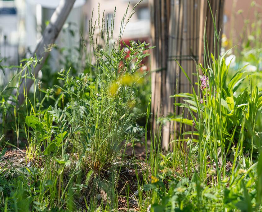 Blumenwiese und Schotterrasen Matter Garten
