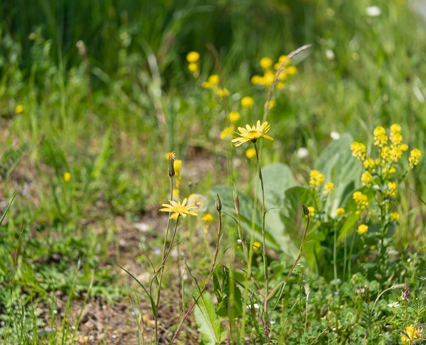 Staudenmischbepflanzung, Blumenwiese und Schotterrasen Matter Garten