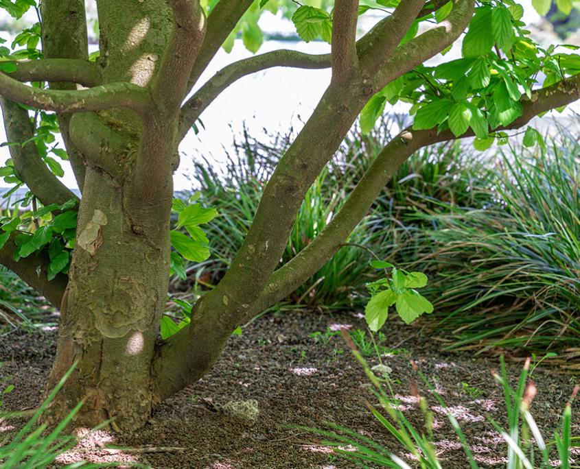 Mehrfamilienhaus Bepflanzung mit Kleinbäumen