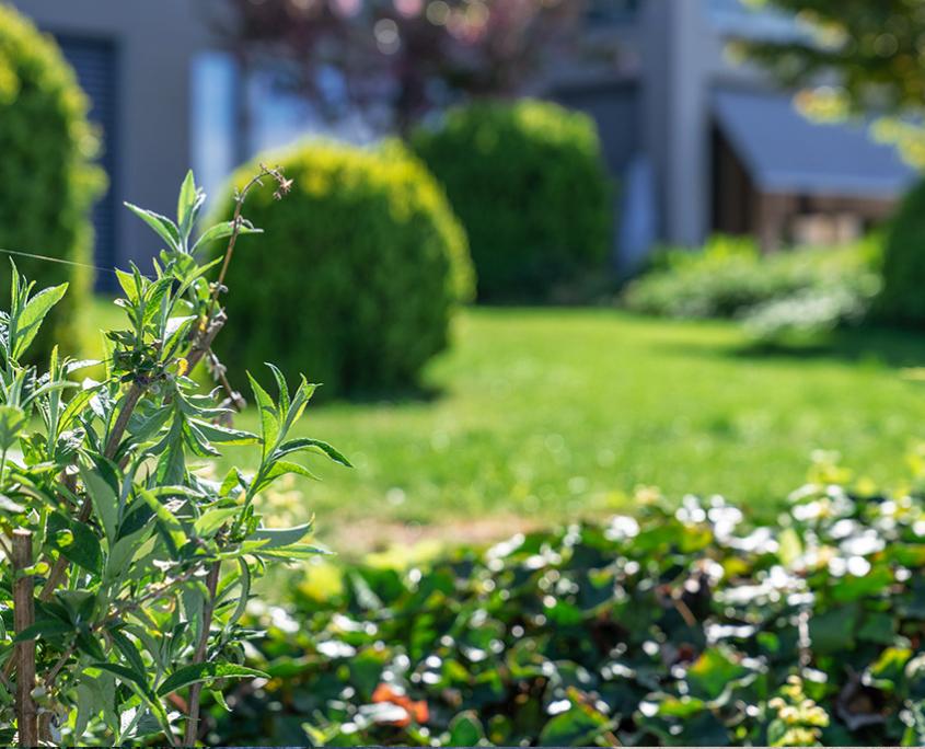 Bepflanzungskonzept Mehrfamilienhaus