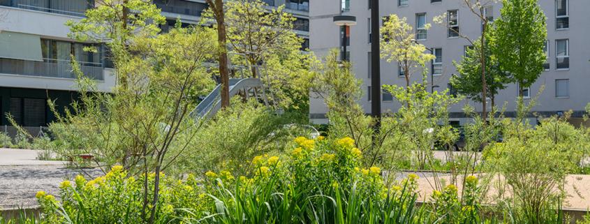 Begrünung Mehrfamilienhäuser mit üppiger Ruderalbepflanzung um Versicherungsbecken, Spielplatz im Innenhof