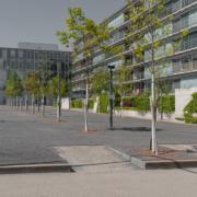 Neubepflanzung Oerliker Park mit diversen Alleebäumen und Föhren