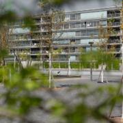 Neubepflanzung Oerliker Park mit diversen Alleebäumen