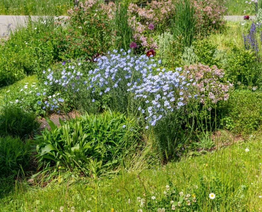 Alterswohnungen Helen Keller Bepflanzung