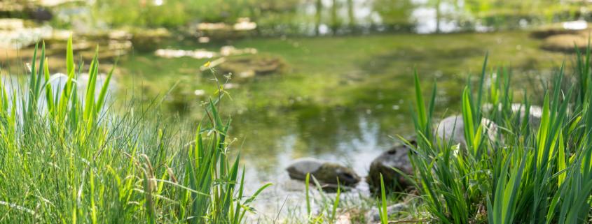 Matter Garten Naturteich