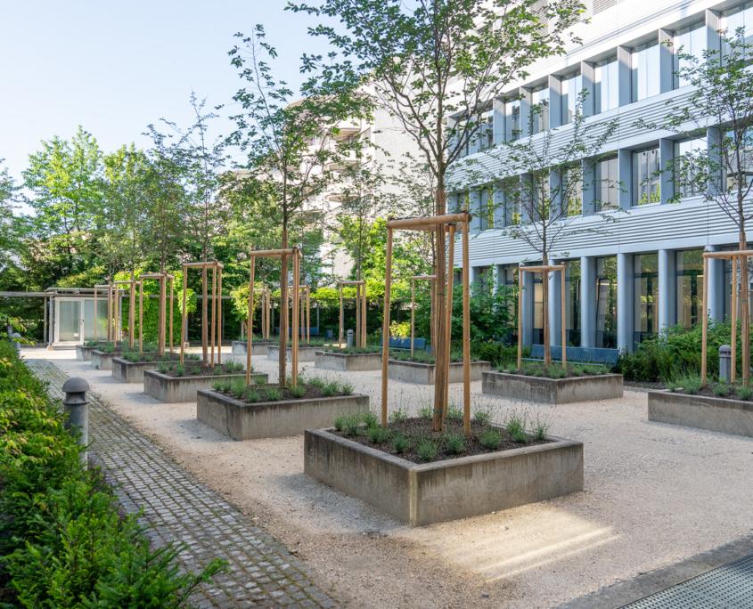 Eggbühlstrasse Zürich Innenhof Begrünung, Kirschen-Allee in Trägen