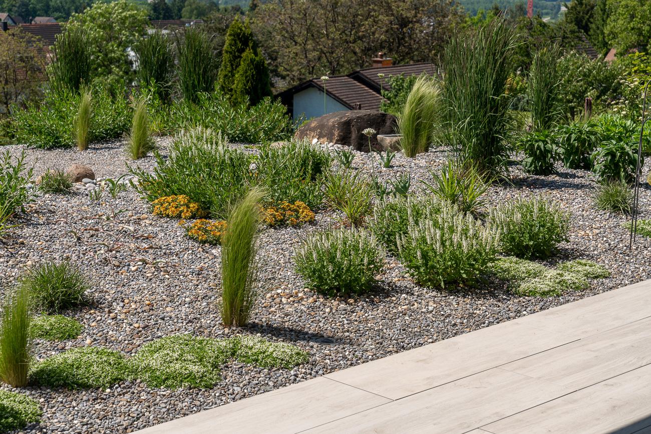 Büsche, Sträucher und Gräser in Privatgarten