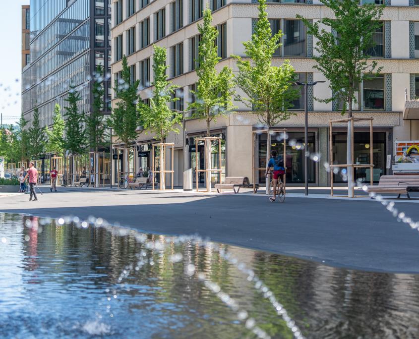 Matter Garten hat Ginkgo Bäume gepflanzt an der Europaalle in Zürich