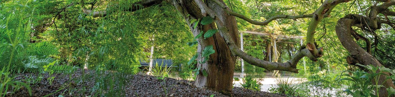 Wunderschöner Baum im Innenhof einer Geschäfsliegenschaft.