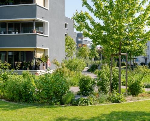 Bülach Kasernenstrasse Bepflanzung mit Staudenrabatten